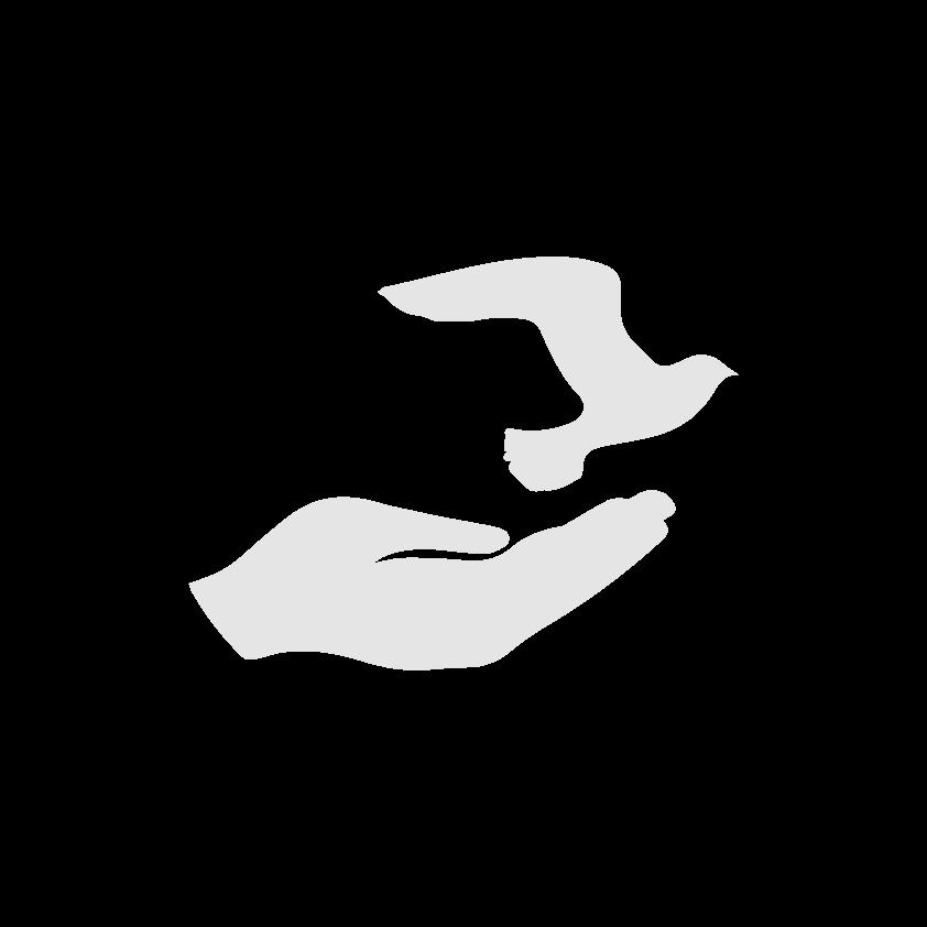 dove-bird-in-hand