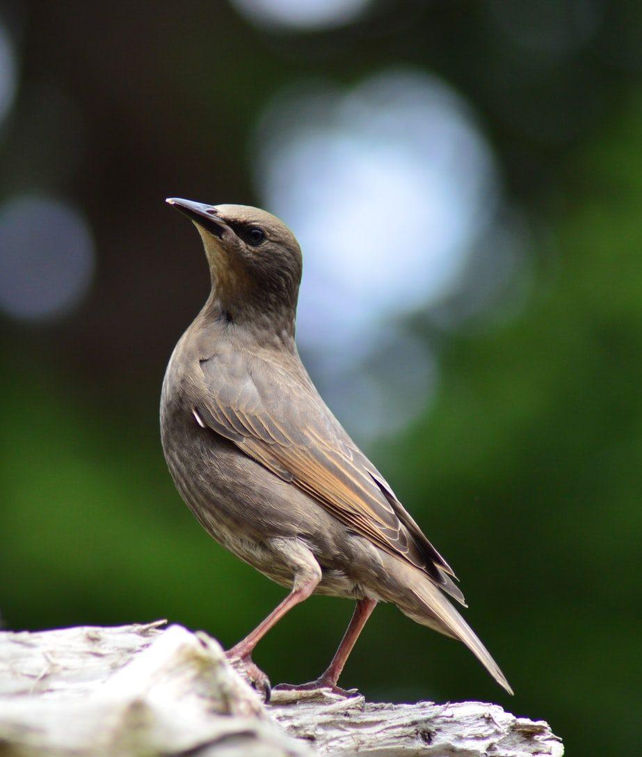 bird-image | Pest Control